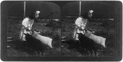Mary's little pets,Girl with white lamb & black lamb,feeding with bottle,c1907
