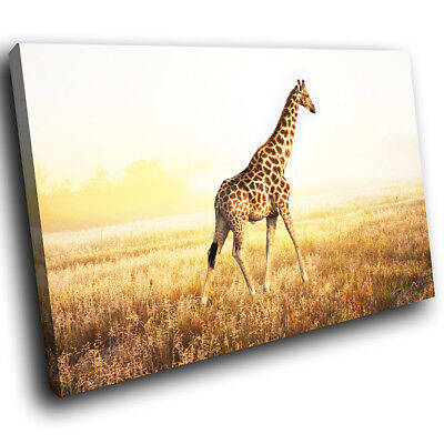 Africa Giraffe Sunset Red Funky Animal Canvas Wall Art Large Picture Prints