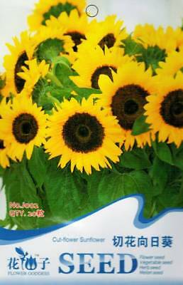 Original Package 20 Cut-flower Sunflower Seed Helianthus Annuus J002