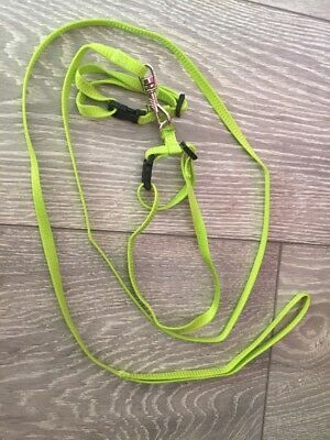 Rabbit harness and lead, click in/ snap buckles Green
