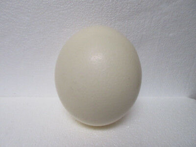 """Ostrich Egg Shell Art Crafts Paint Engrave Display Easter 6""""+"""