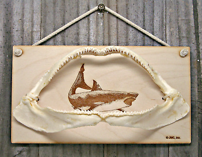 Real Shark Jaw with Sharks Teeth Taxidermy Large Wall Mount on Laser Wood Plaque