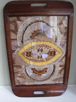 A Butterfly Wing Tray with Tunbridgeware Frame *