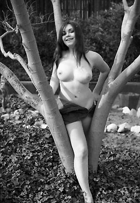 1960s Ron Vogel Negative, busty nude brunette pin-up girl Diane Greer, t944400