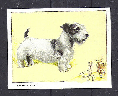 1934 UK Dog Art Portrait Gallaher Cigarette Large Trade Card SEALYHAM TERRIER