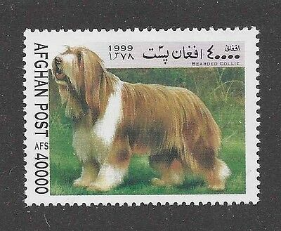 Dog Art Full Body Portrait Postage Stamp BEARDED COLLIE Afghanistan 1999 MNH