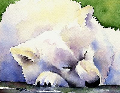 SAMOYED Painting Watercolor 8 x 10 ART Print Signed by Artist DJR