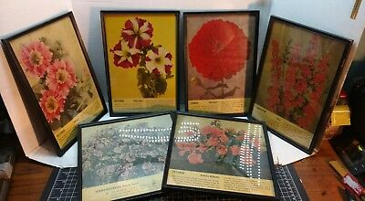 Lot of 6 Vintage Framed Burpee Seed Posters Ads - Garden Farm Petunia Larkspur