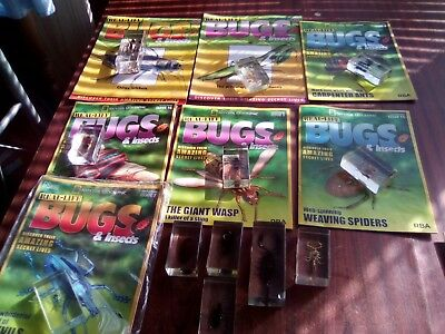 Real life bugs and insects bundle