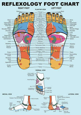 Reflexology Foot Chart A4 Laminated Mini Poster - Healing, Relaxation