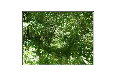 Michigan Land- Lot # 6 Creek Frontage- Across The Street From Maston Lake!!