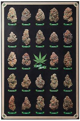 Laminated Best Buds Marijuana Types Weed Pot Chart Poster 24x36