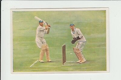 Cricket : Surrey v South Africa : German sports trade card 1932