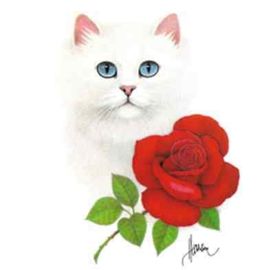 White Cat with Rose Shirt, Blue Eyes & Pink Nose Kitty with Flower. Small - 5X
