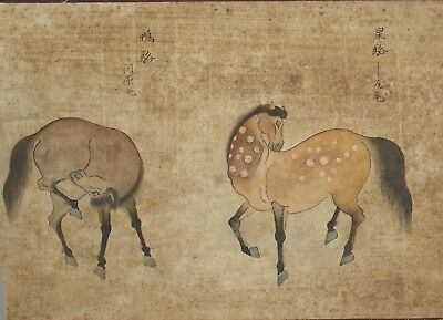 Fine antique 18th / 19th century Chinese painting ink and colour - Horses - #1