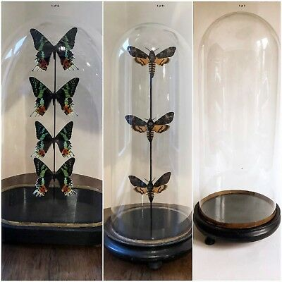 Antique French Glass Domes 3 In Stock Sold Separately Butterflies Clock Display