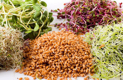 Sprouting 7 0000 seeds 20g from bonsai_seeds - VITA MIX PLUS - 4 species #11012