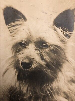 """Vintage Dog Postcard Terrier Puppy Real Photograph """" So Tired Of Waiting """""""