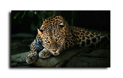 Big Cat Jaguar Canvas  Print Wall Art Picture 18 X 32 Inch