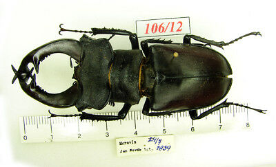 106-12  Lucanus from old collection - 1939  (condition ? see photo)