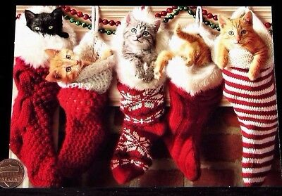 Adorable Kitten Cats Stockings Fireplace Cute - Christmas Greeting Card - NEW