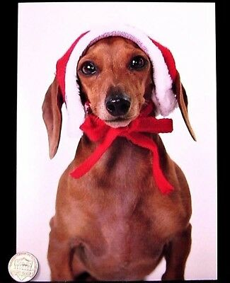 Adorable Dachshund Puppy Dog Hat Bow - Holidays Christmas Greeting Card - NEW