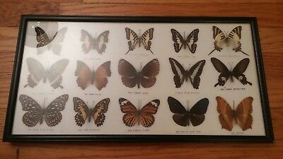 Framed butterfly collection. (15) total