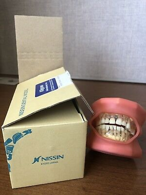 Nissin Dental Model With Removable Teeth Typondont