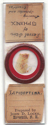 Antique Microscope Slide  American Preparer