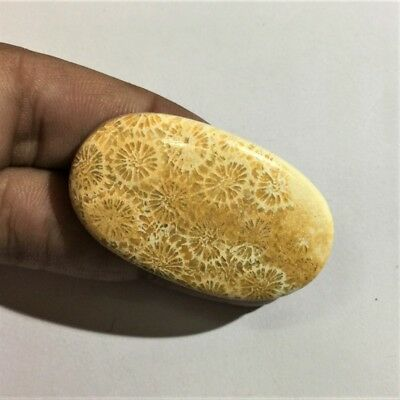 70.1 Cts 100% Natural Fossil Coral Cabochon Top Quality Loose Gemstone L#888-3