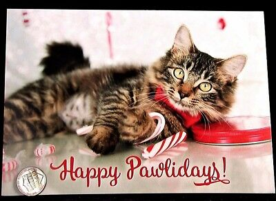 Cute Tabby Kitten Cat Candy Canes Ribbon - Happy Pawlidays Christmas Card - NEW