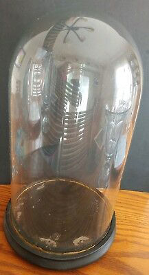 Antique Victorian Round Glass Display Dome With Wood Base 18 inches Tall