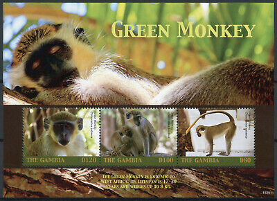 Gambia 2018 MNH Green Monkey 4v M/S Fauna Monkeys Primates Wild Animals Stamps