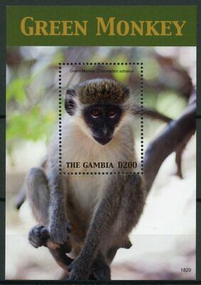 Gambia 2018 MNH Green Monkey 1v S/S Fauna Monkeys Primates Wild Animals Stamps