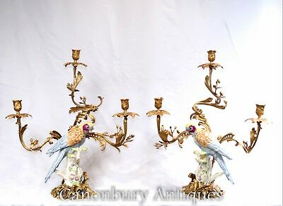 Pair French Candelabras  - Empire Parrot Candles Porcelain Bird Branch