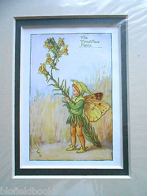 CICELY MARY BARKER - The Toad Flax Flower Fairy - Vintage Double Mounted Print