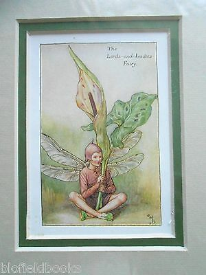 CICELY MARY BARKER - Lords and Ladies Flower Fairy, Vintage Double Mounted Print