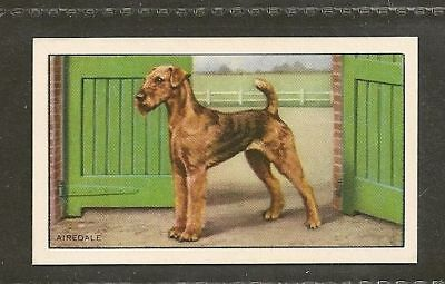 1936 Dog Art Full Body Study Gallaher Series A Cigarette Card AIREDALE TERRIER