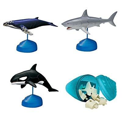 Humpback Whale/Great White/Orca Sea Life 4D Puzzle Egg Model Toy Kits