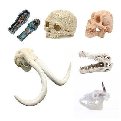 Resin Animal Skull Model Fossil Aquarium Decoration Home Decorative Ornament