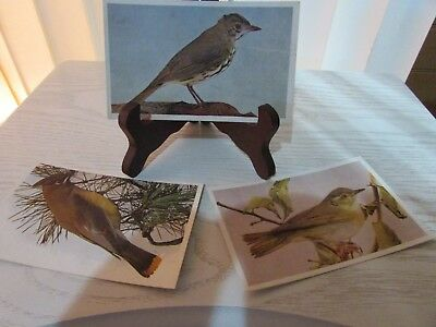 Antique Magazine Prints of Birds  - 3pc Collection - 5 1/2 X 3 3/8
