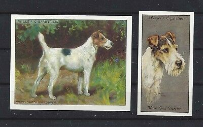 1915 - 1940 UK Reissue Reproduction Dog Art Cigarette Card x 2 WIRE FOX TERRIER