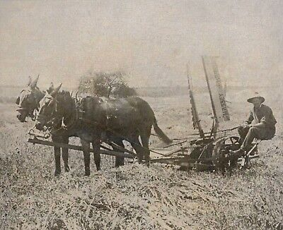 Farmer Plowing the field, Two Horses, Ranch life, 1915 Photograph, Old Country