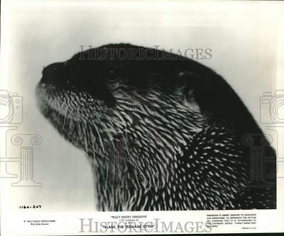 """1961 Press Photo Flash the otter appears in Disney's """"Flash, the Teenage Otter"""""""