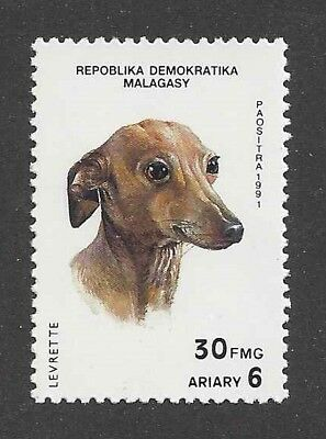 Dog Art Head Study Portrait Postage Stamp ITALIAN GREYHOUND Madagascar 1991 MNH