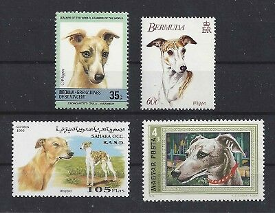 Dog Art Head Body Study Portrait Postage Stamp Collection WHIPPET 4 x MNH