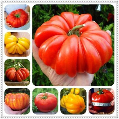 200Pcs Giant Tomato seeds Organic Heirloom plants Vegetables Perennial Non-GMO P