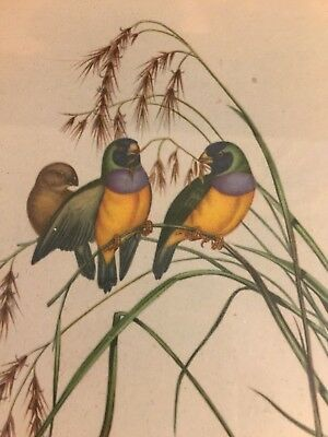 Vintage Lithograph Birds Grass Art Print Professionally Framed Bamboo Asian
