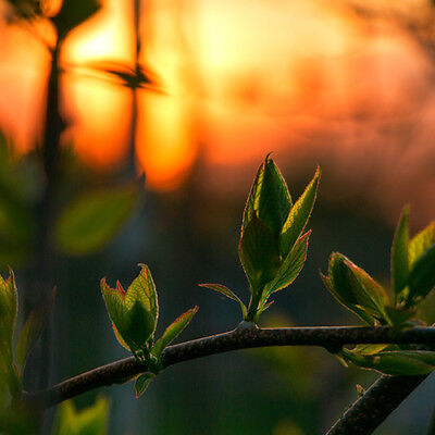 Digital Photo Picture Image Art Wallpaper - Summer Macro Sunset Bud