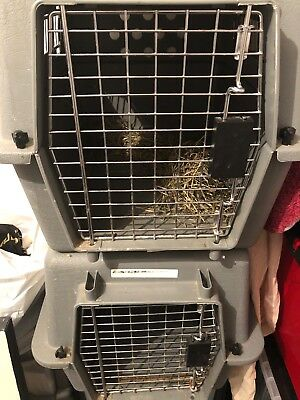 Petmate Sky Kennel Cargo Crate Small X 2